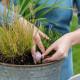 Planting-An-Autumn-Bucket-QCON379-nicola-stocken.jpg thumbnail