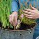 Planting-An-Autumn-Bucket-QCON381-nicola-stocken.jpg thumbnail