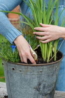 Planting-An-Autumn-Bucket-QCON382-nicola-stocken.jpg