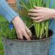 Planting-An-Autumn-Bucket-QCON382-nicola-stocken.jpg thumbnail