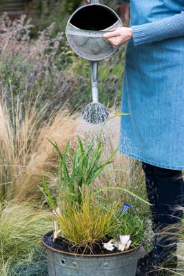 Planting-An-Autumn-Bucket-QCON383-nicola-stocken.jpg