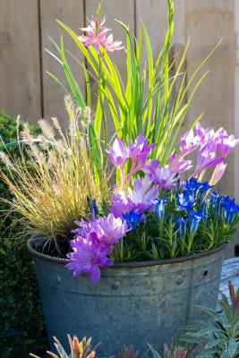 Planting-An-Autumn-Bucket-QCON384-nicola-stocken.jpg