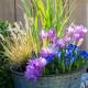 Planting-An-Autumn-Bucket-QCON384-nicola-stocken.jpg thumbnail