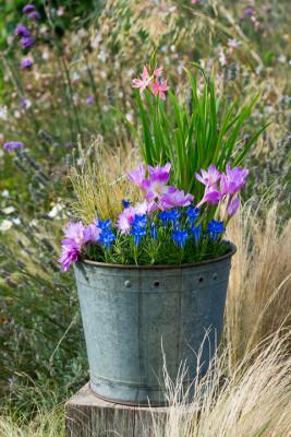 Planting-An-Autumn-Bucket-QCON385-nicola-stocken.jpg