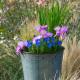 Planting-An-Autumn-Bucket-QCON385-nicola-stocken.jpg thumbnail