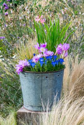 Planting-An-Autumn-Bucket-QCON386-nicola-stocken.jpg