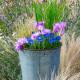 Planting-An-Autumn-Bucket-QCON386-nicola-stocken.jpg thumbnail