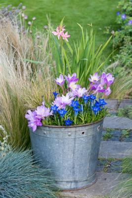 Planting-An-Autumn-Bucket-QCON387-nicola-stocken.jpg