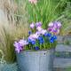 Planting-An-Autumn-Bucket-QCON387-nicola-stocken.jpg thumbnail