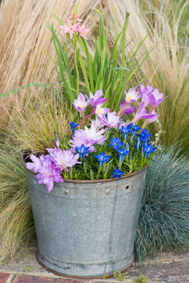 Planting-An-Autumn-Bucket-QCON388-nicola-stocken.jpg