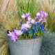 Planting-An-Autumn-Bucket-QCON388-nicola-stocken.jpg thumbnail