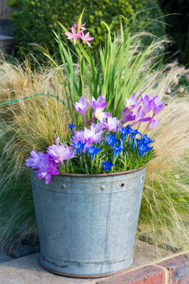 Planting-An-Autumn-Bucket-QCON389-nicola-stocken.jpg