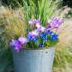 Planting-An-Autumn-Bucket-QCON389-nicola-stocken.jpg thumbnail