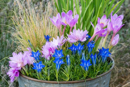 Planting-An-Autumn-Bucket-QCON390-nicola-stocken.jpg