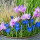 Planting-An-Autumn-Bucket-QCON390-nicola-stocken.jpg thumbnail