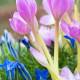 Planting-An-Autumn-Bucket-QCON392-nicola-stocken.jpg thumbnail