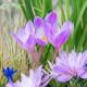 Planting-An-Autumn-Bucket-QCON393-nicola-stocken.jpg thumbnail