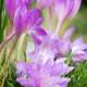Planting-An-Autumn-Bucket-QCON395-nicola-stocken.jpg thumbnail