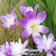 Planting-An-Autumn-Bucket-QCON396-nicola-stocken.jpg thumbnail