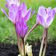 Planting-An-Autumn-Bucket-QCON397-nicola-stocken.jpg thumbnail