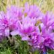 Planting-An-Autumn-Bucket-QCON398-nicola-stocken.jpg thumbnail
