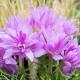 Planting-An-Autumn-Bucket-QCON399-nicola-stocken.jpg thumbnail