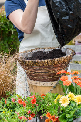 Planting-a-Summer-Hanging-Basket-QHAA152-nicola-stocken.jpg
