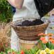 Planting-a-Summer-Hanging-Basket-QHAA152-nicola-stocken.jpg thumbnail