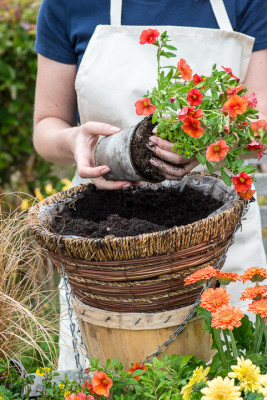 Planting-a-Summer-Hanging-Basket-QHAA153-nicola-stocken.jpg