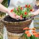Planting-a-Summer-Hanging-Basket-QHAA154-nicola-stocken.jpg thumbnail