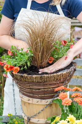 Planting-a-Summer-Hanging-Basket-QHAA155-nicola-stocken.jpg