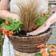 Planting-a-Summer-Hanging-Basket-QHAA155-nicola-stocken.jpg thumbnail
