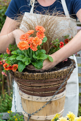 Planting-a-Summer-Hanging-Basket-QHAA156-nicola-stocken.jpg