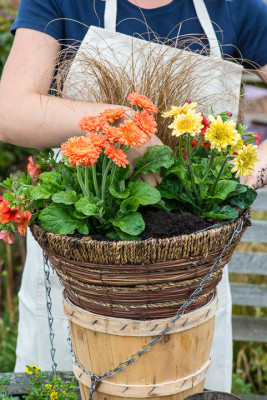 Planting-a-Summer-Hanging-Basket-QHAA157-nicola-stocken.jpg