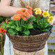 Planting-a-Summer-Hanging-Basket-QHAA157-nicola-stocken.jpg thumbnail
