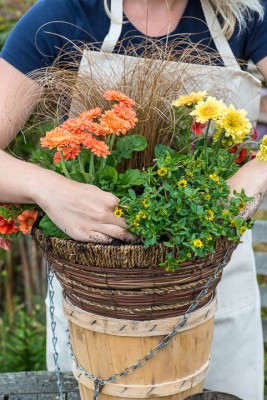 Planting-a-Summer-Hanging-Basket-QHAA158-nicola-stocken.jpg