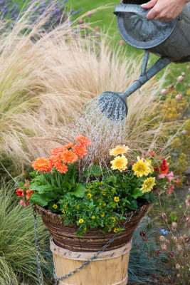 Planting-a-Summer-Hanging-Basket-QHAA159-nicola-stocken.jpg
