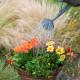 Planting-a-Summer-Hanging-Basket-QHAA159-nicola-stocken.jpg thumbnail