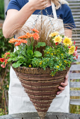 Planting-a-Summer-Hanging-Basket-QHAA160-nicola-stocken.jpg