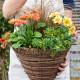 Planting-a-Summer-Hanging-Basket-QHAA160-nicola-stocken.jpg thumbnail