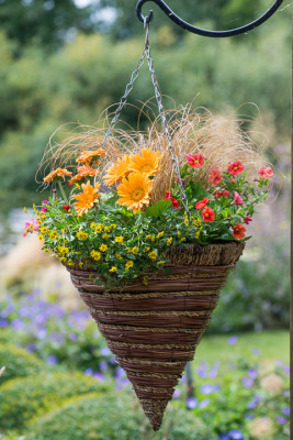 Planting-a-Summer-Hanging-Basket-QHAA161-nicola-stocken.jpg