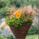 Planting-a-Summer-Hanging-Basket-QHAA161-nicola-stocken.jpg thumbnail