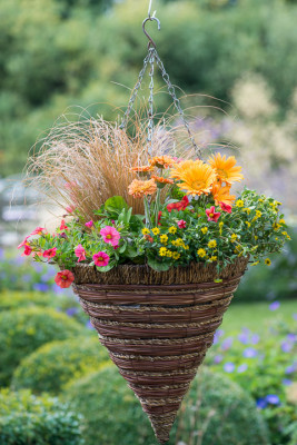 Planting-a-Summer-Hanging-Basket-QHAA162-nicola-stocken.jpg