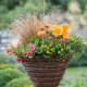 Planting-a-Summer-Hanging-Basket-QHAA162-nicola-stocken.jpg thumbnail