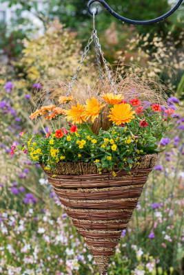 Planting-a-Summer-Hanging-Basket-QHAA163-nicola-stocken.jpg