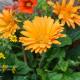 Planting-a-Summer-Hanging-Basket-QHAA165-nicola-stocken.jpg thumbnail