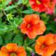 Planting-a-Summer-Hanging-Basket-QHAA167-nicola-stocken.jpg thumbnail