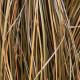 Planting-a-Summer-Hanging-Basket-QHAA168-nicola-stocken.jpg thumbnail
