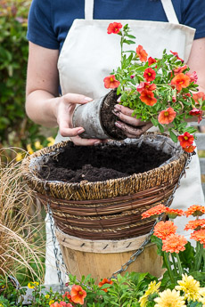Thumbnail image for Planting a Hot Hanging Basket