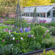 Victorian-Parterre-in-Spring-GWBH024-nicola-stocken.jpg thumbnail